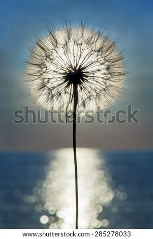 Dandelion silhouette against sunset blue sky, meditative vertical zen background - stock photo