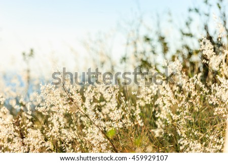 Dandelion with abstract color - stock photo