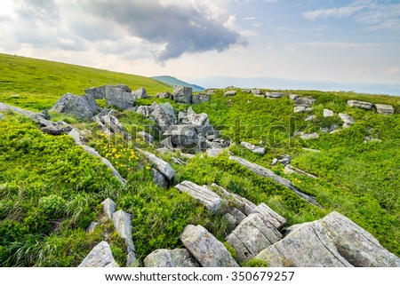 dandelions among white sharp stones on the hillside meadow on top of mountain range - stock photo