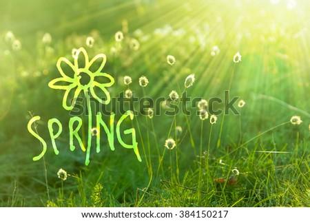 Dandelions dawn  with discription Hello Spring - stock photo