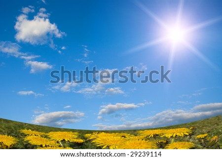 Dandelions, sky and sun - stock photo