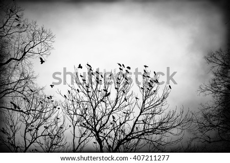 Dark backlit image of flock of crows in a tree top in black and white. - stock photo