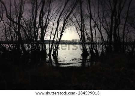 Dark black forest with a view of magical lake - stock photo