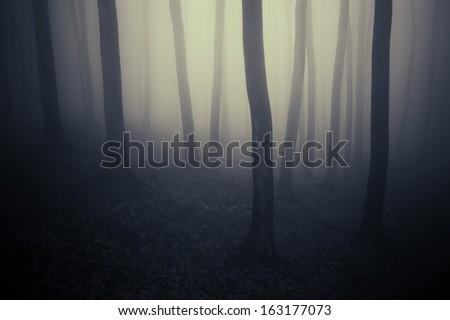 dark eerie forest - stock photo