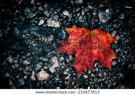 dark fall dark stone ground background with autumn leaf lying on the street - stock photo