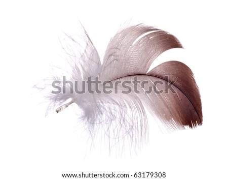 dark feather isolated on white background - stock photo