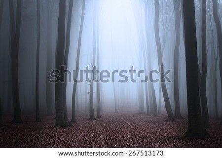 Dark foggy forest - stock photo