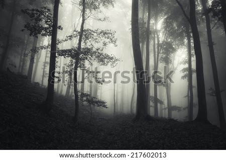 dark forest on halloween - stock photo