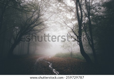 dark forest path - stock photo