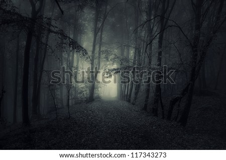 dark forest with fog - stock photo