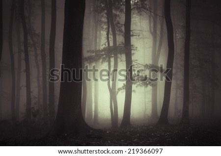 dark forest with mysterious light - stock photo