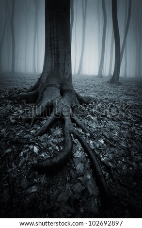 dark forest with tree roots - stock photo