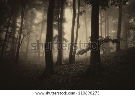 dark forest with tree silhouettes sepia - stock photo