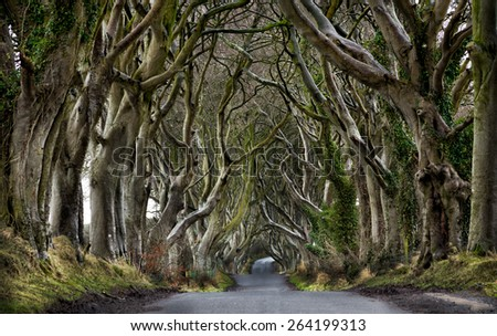 Dark Hedges - stock photo