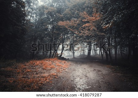 dark mysterious forest path - stock photo