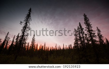 dark northern forest in the evening after sunset - stock photo