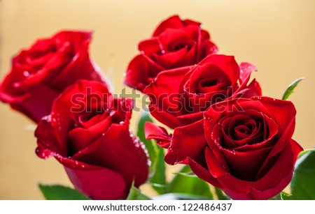 Dark red roses on yellow background - stock photo