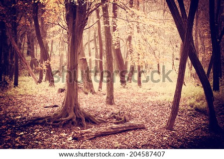 Dark spooky forest - stock photo