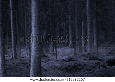 Dark spooky forest at night in shades of blue - stock photo