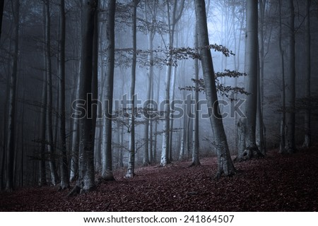 Dark spooky forest in a foggy autumn day - stock photo