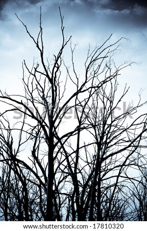 Dark spooky trees - stock photo