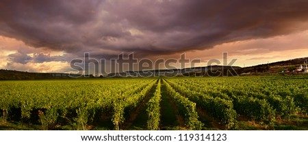 dark storm clouds gathered over the green vineyard - stock photo