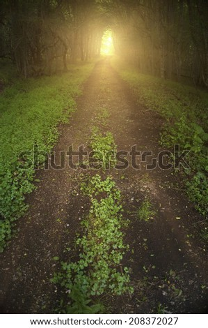 Dark sullen forest road with trees forming a tunnel over it and light at the end. - stock photo