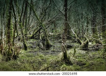 dark swamp forest in Ireland - stock photo