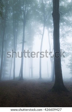 Dark tree into the forest - stock photo
