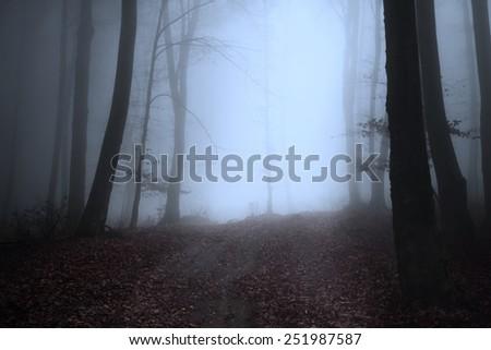 Dark tree silhouettes  - stock photo