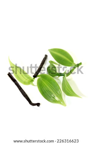 dark Vanilla sticks with green vanilla leaves on a light background - stock photo