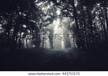 dark woods with path - stock photo
