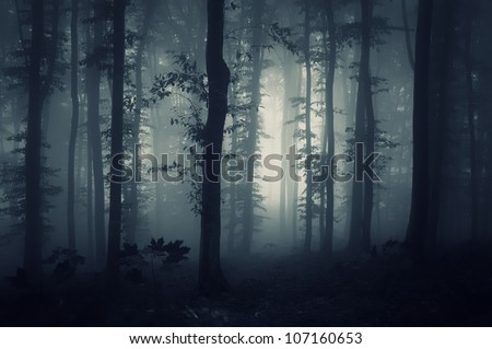 darkness in a forest - stock photo