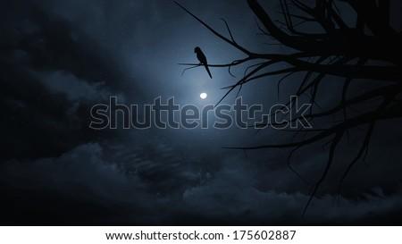 Darkness night sky  on Halloween. - stock photo