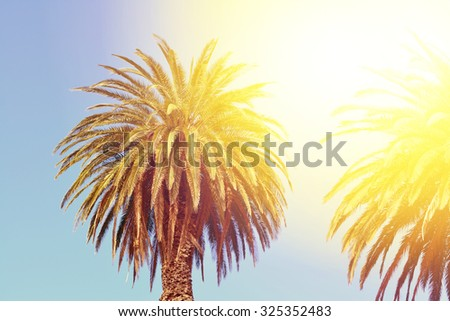 Date palm trees on a sunny day. Toned image. Selective focus - stock photo