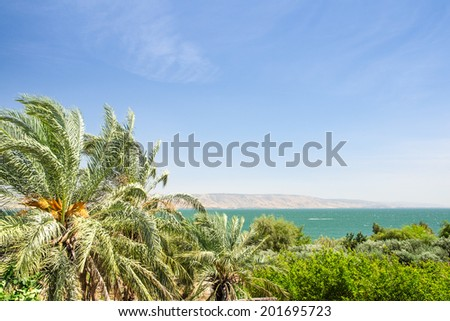 Date palms on the shore of Lake Kinneret or Galilee sea with clear blue sky - stock photo