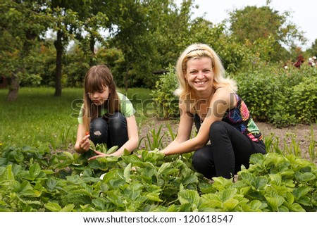 daughter and mother is working in the vegetables garden, harvested strawberries - stock photo