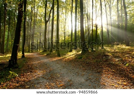 Dawn in the forest - stock photo