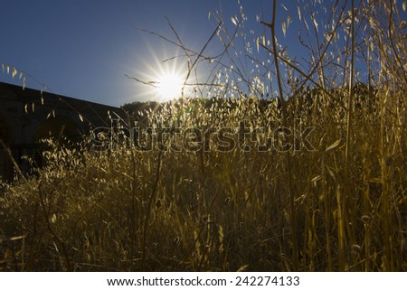 Dawn sun rising above the mountains in a sunburst illuminating the foliage of the trees with a backlit beauty - stock photo