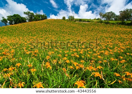 daylily hill with beautiful cloudscape background - stock photo