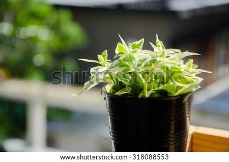 de focus ,selective focus plants in pots - stock photo