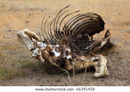 Dead animals in the arid steppe - stock photo