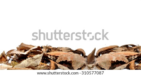 Dead autumn leaves border on white background - stock photo