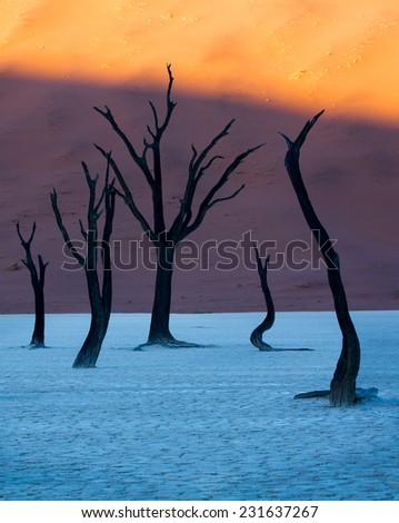 Dead Camelthorn Trees, Deadvlei, Namib-Nauklauft National Park, Namibia - stock photo