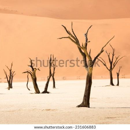 Dead Camelthorn Trees, Deadvlei, Namib-Naukluft National Park, Namibia - stock photo