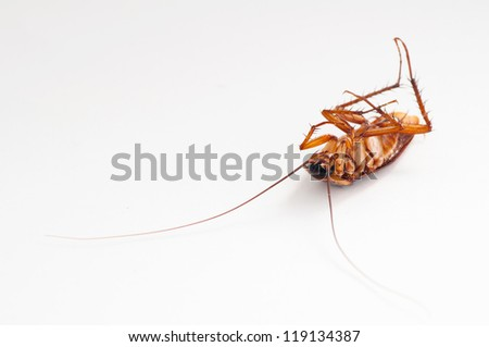 Dead cockroach - stock photo