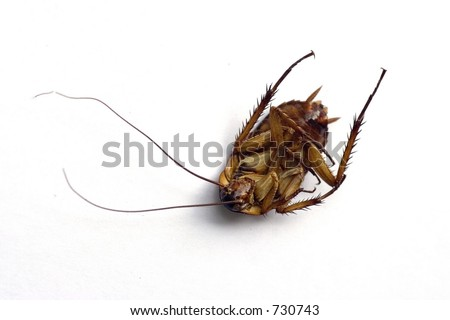 Dead cockroach close up - stock photo