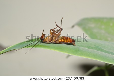 Dead cockroach in a leaf - stock photo