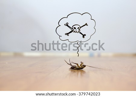 Dead cockroach on floor , pest control concept - stock photo