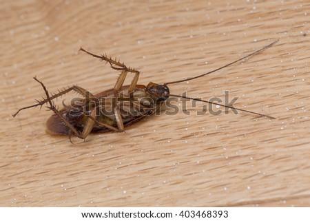 Dead cockroach on the floor - stock photo